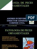conferencia patologia
