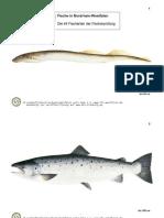 FischKarNRW