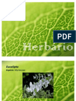 Herb a Rio