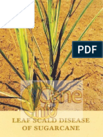 Leaf Scald Disease of Sugarcane