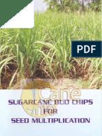 Sugarcane Budchips for Seed Multiplication