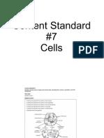 SC7 Cells1
