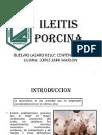 Ileitis Porcina