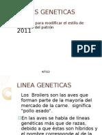 LINEAS GENETICAS