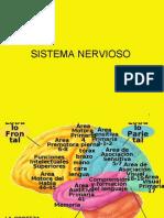 Diapositivas Corteza Sensib. y Vias Para Clase Sensitiva