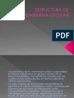 Estructura de Membrana Celular Diapositivas Prepa Clavijero
