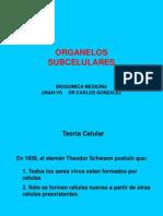 ORGANELOS CELULARES[1]