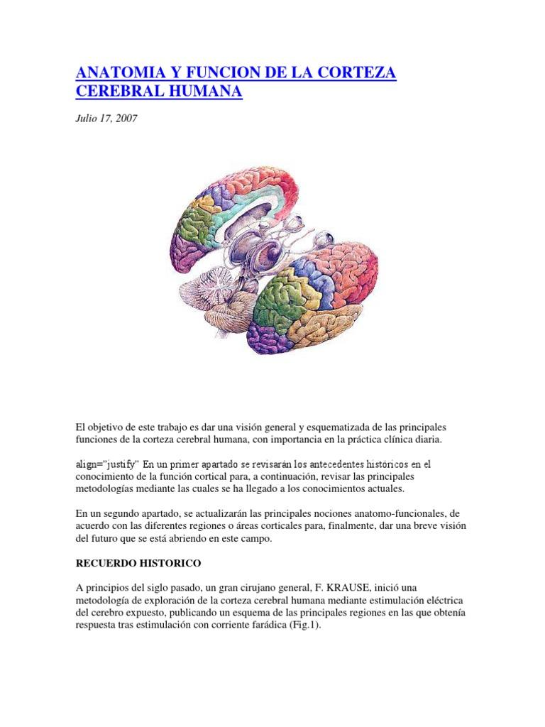 Anatomia y Funcion de La Corteza Cerebral