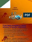 Introduction to Gene Anatomy