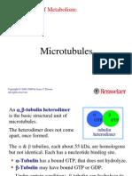 30-microtubule
