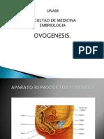 Sesión 6 ovogenesis y foliculogénesis