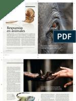 Respuestas en Animales.indd Copia