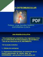 Anatomia Osteo Muscular