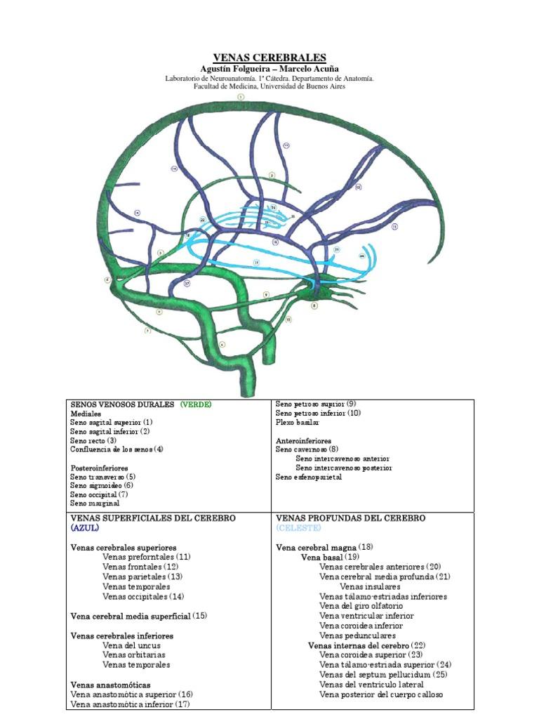 Venas Cerebrales
