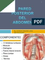Abdominal Posterior (2)