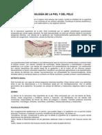 Estructura y Fisiologia de La Piel