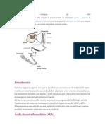 Funciones biológicas del ADN