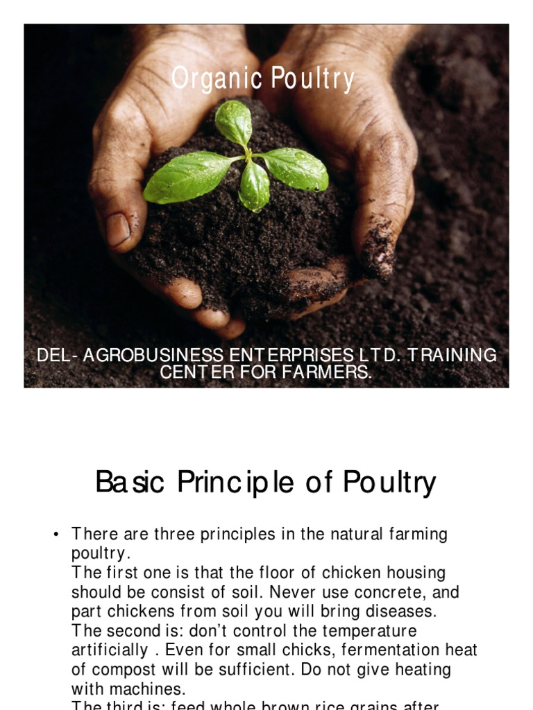 Organic Poultry   Chicken   Poultry Farming