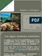 Algas y hongos