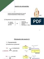 Tema 12 degradacion aminoacidos