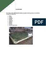 Cuidados y Practicas Para La Conservacion Del Agua en La Finca Hachon[1]