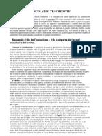 4-Tracheofite-Pteridofite