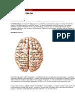Portal da Mente e do Cérebro
