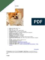 Ficha básica del Pomerania
