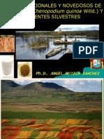Usos Tradicionales y Novedosos Quinua y Parientes Silvestres-IICIQuinua-RM