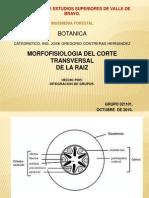 Morfologia de La Raiz.