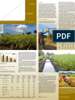 What are the sources of rice yield growth in the Philippines?