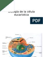 Biologa de La Clula Eucariotica