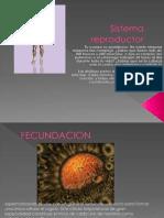 Sistema reproductor.