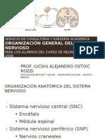 2011 Organizaciuon Del Sistema Nervioso 2011