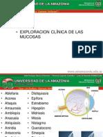 7. EXAMEN DE MUCOSAS