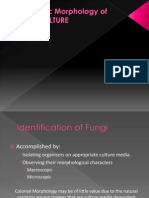 Exercise 11 - Microscopic Morphology of Fungal Culture