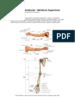 anatomia-Dilma