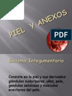 PIEL  Y ANEXOS