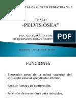 PELVIS+ÓS..