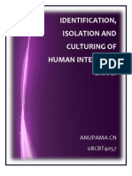 Identification, Isolation and Culturing of Human Intestinal E