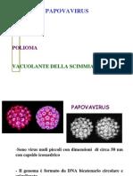 8.Papovavirus Solo virus