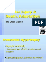 1 Cellular Injury & Death, Adaptation