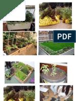 Fotos Cultivos en Azotea