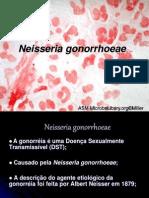 Neisseria gonorrhoeae 1