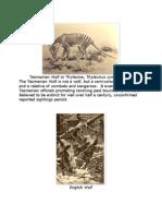 Tasmanian Wolf or Thylacine