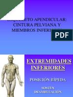 Osteologia Miembro Inferior