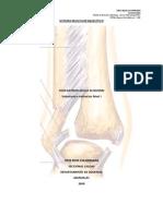 musculo esqueletico