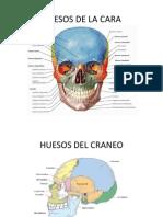 Huesos Del Craneo y La Cara