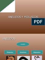 ANELIDOS Y MOLUSCOS 2011