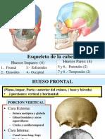 A) Osteologia